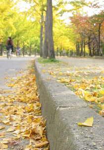 2005大阪城公園